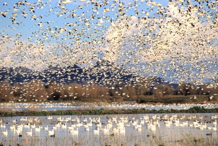 Colusa Wildlife Refuge